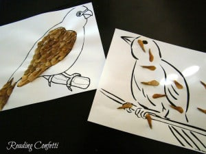 maple seed birds 5