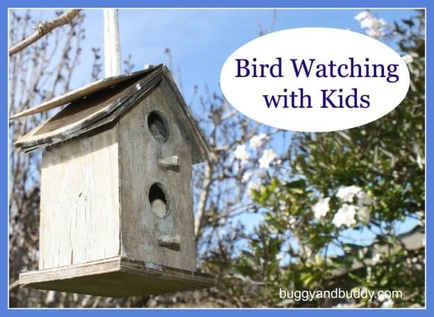 bird watching with kids
