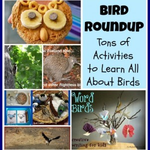 Learning All About Birds Roundup