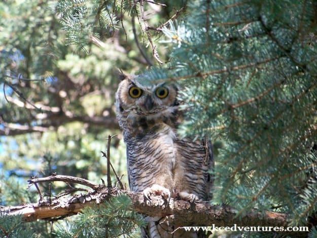 owltheme