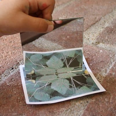 Finding Symmetry in Nature (Outdoor Math Activity for Kids)