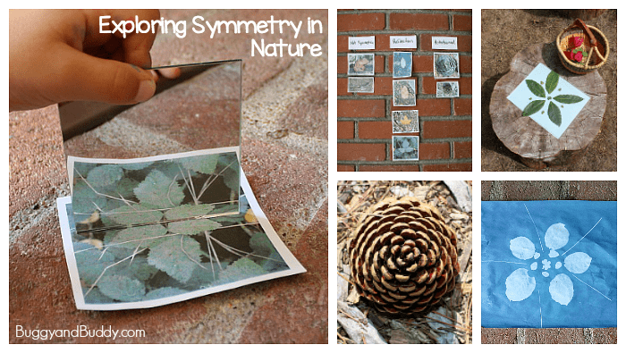 Exploring Symmetry in Nature- Math and Science for Kids