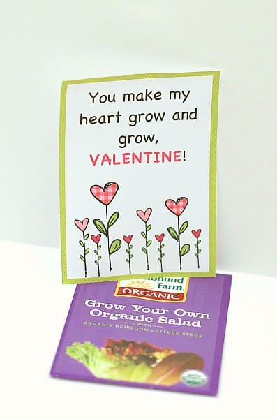Seed Packet Homemade Valentine (A great candy-free alternative!)~ BuggyandBuddy.com