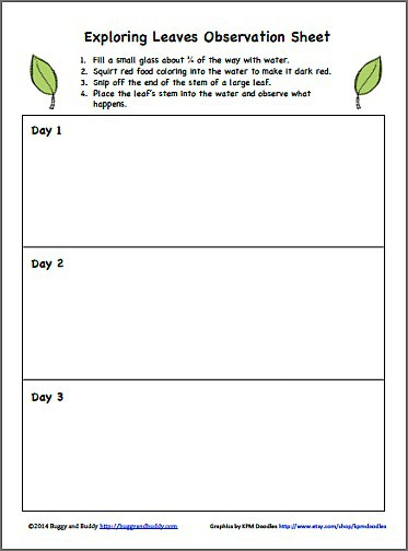 Free Observation Sheet for Exploring Leaves