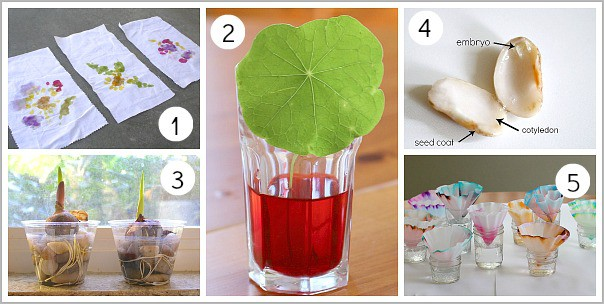 Spring Themed Science Activities from Buggy and Buddy