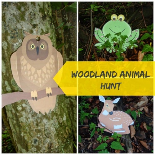 Woodland Animal Hunt