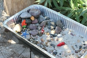 Tide Pool Science Experiment for Kids