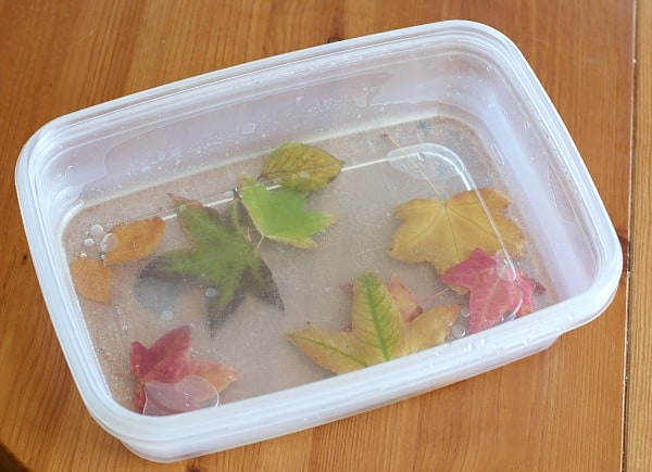 how to preserve leaves glycerin