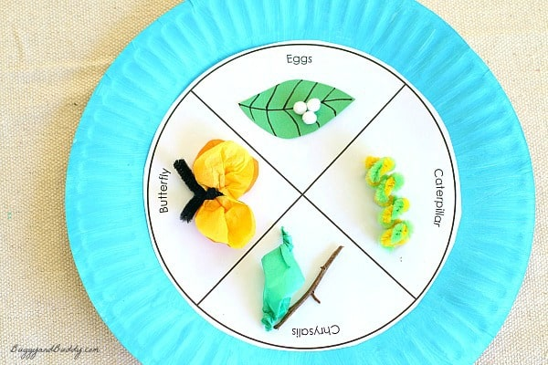 Butterfly Life Cycle Paper Plate Craft for Kids (w/ FREE template)~ BuggyandBuddy.com
