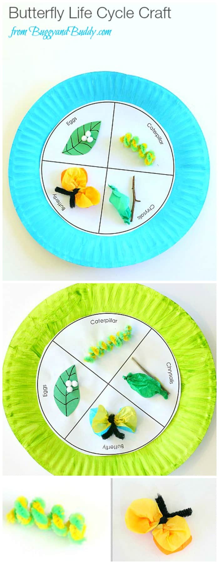 Paper Plate Butterfly Life Cycle Craft for Kids (with FREE printable template)- Fun spring and science activity for kids! ~ BuggyandBuddy.com
