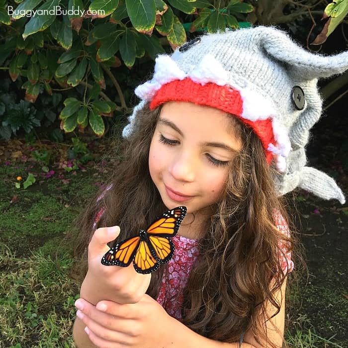 the monarch butterfly life cycle with kids