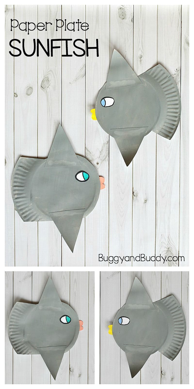paper plate sunfish craft for kids- sunfish or mola fish