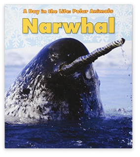 narwhal by katie marisco