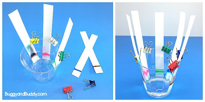 chromatography science / STEM / STEAM experiment for kids