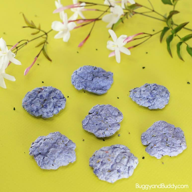 Make Seed Balls from Recycled Paper - Buggy and Buddy
