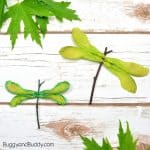 Maple Tree Helicopter Seed Dragonfly Craft for Kids