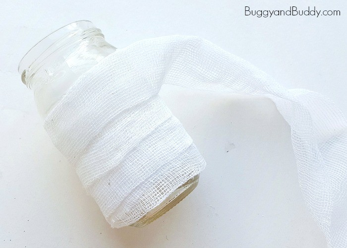 how to make a fold out oval paper karnivale lantern